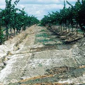 Анализ почвы - важный элемент управления питанием растений. Часть вторая