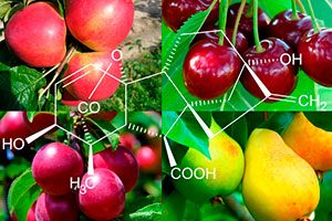 Гиббереллин – гормон молодости для растений