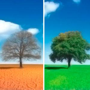 Улучшение (рекультивация) структуры почвы путем внесения органики и микробиологических удобрений