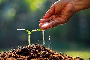 Нормы разведения удобрений