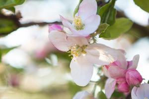 Листовые подкормки для плодовых культур