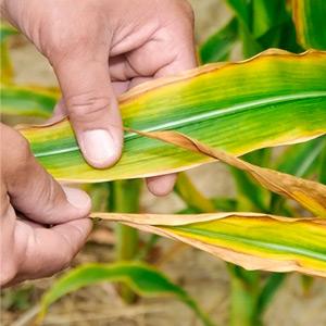 Роль цинка в питании растений