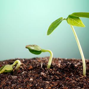 Аминокислоты в составе удобрений и их роль в развитии растений